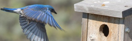 Blue Bird Boxes make great gifts