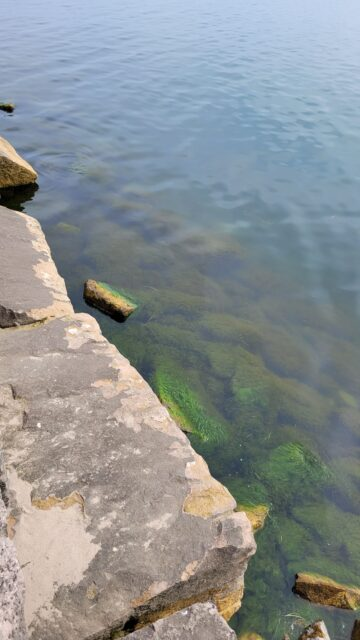 Shoreline Algae Development Sodus Bay