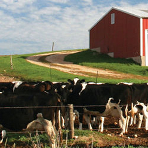 Governor Cuomo Announces $50 Million Available to Support Water Quality Protection Projects on New York Livestock Farms