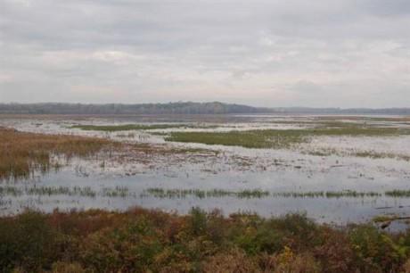 Wetlands Data Mapper