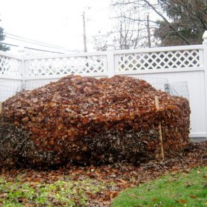 composting-leaves