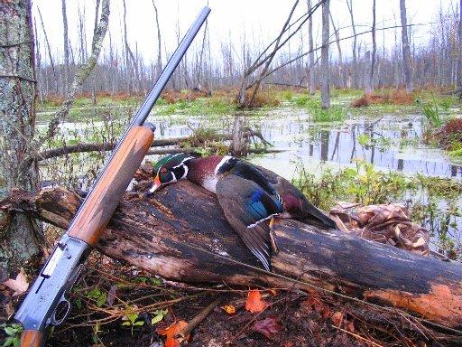 duck_water_fowl_hunt
