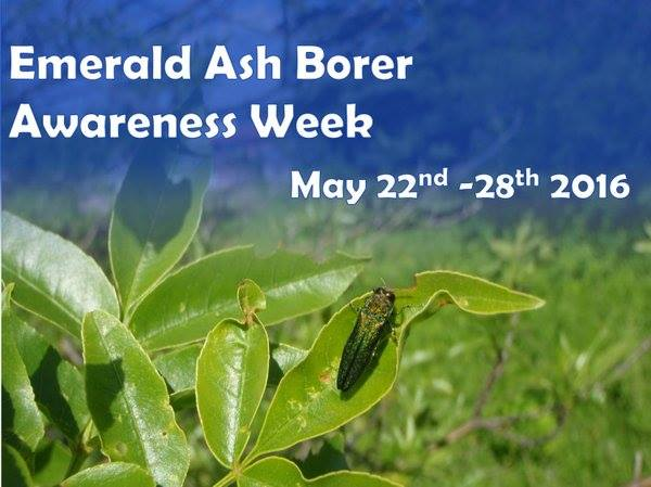 Dec announces sixth annual emerald ash borer awareness week for How much is a new york state fishing license