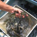 Fish Sale Items